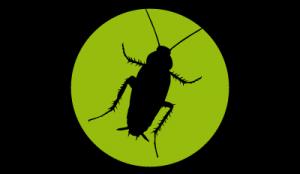 icono cucaracha
